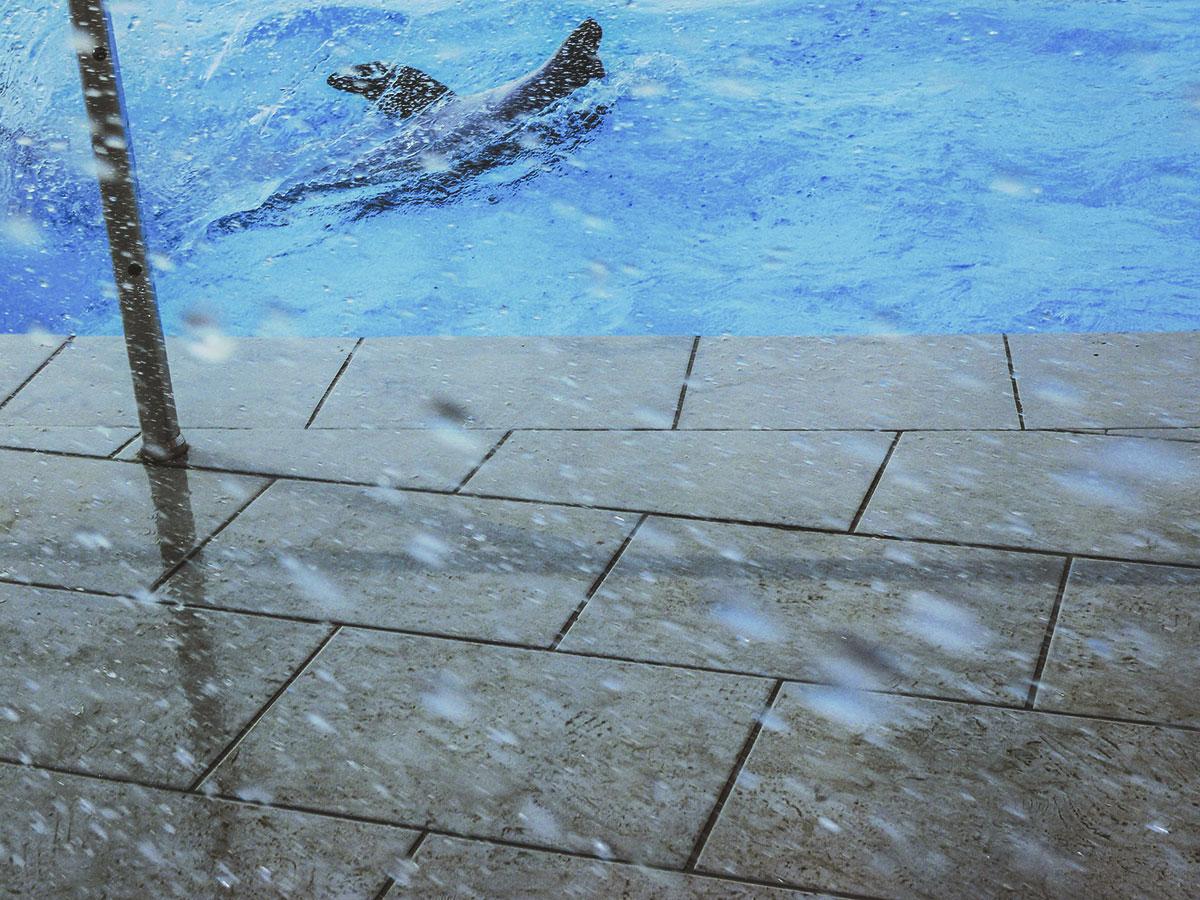 Djurvänlig turism: Simma med en delfin