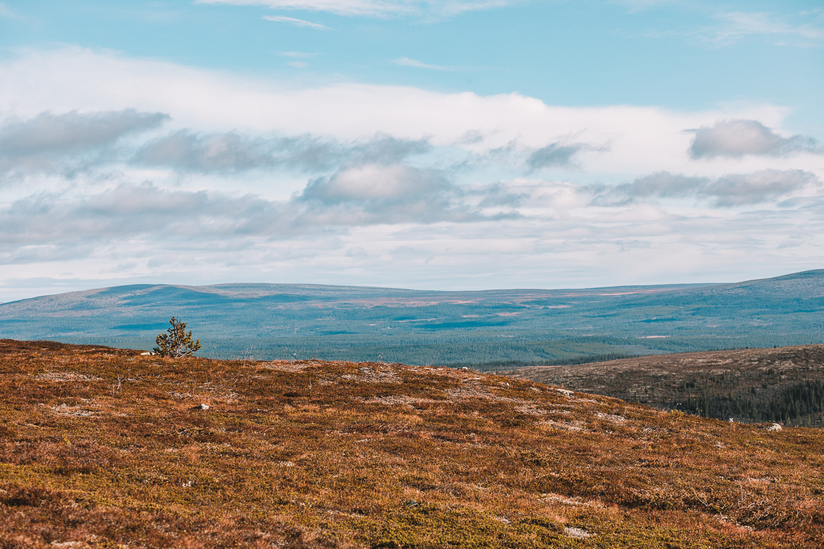 Nipfjällets Lillnipen i Dalarna