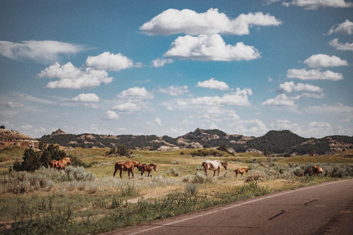 En dag i Theodore Roosevelt National Park